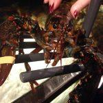 Red Lobester celebra el LobsterFest con variedades de langostas #BestLobsterFest